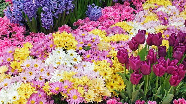How to shape a garden - flowers