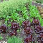 Composting leads to the healthful ground