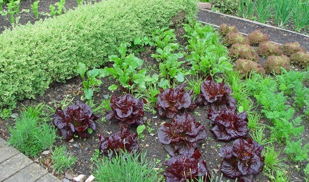 Composting - vegetable garden