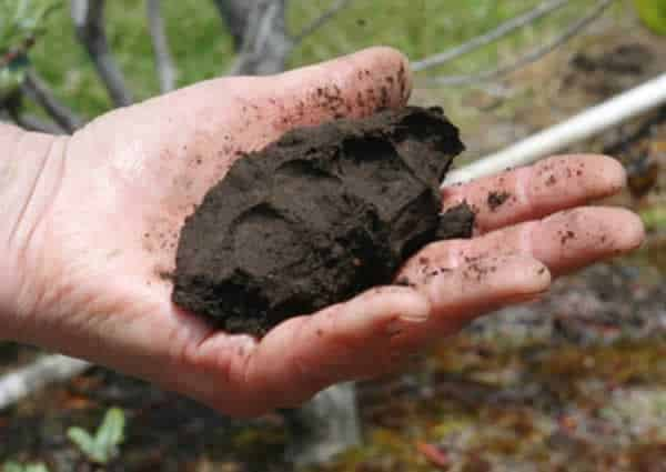 How to prepare soil for planting - earthball