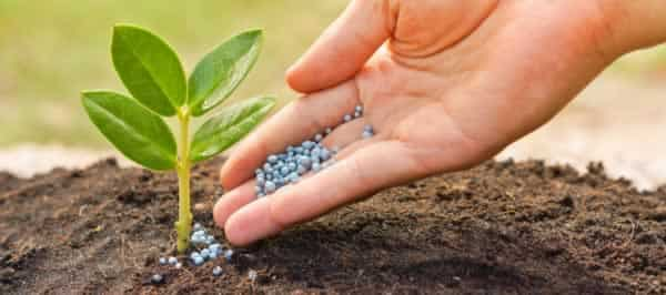 How to prepare soil for planting - fertilizer
