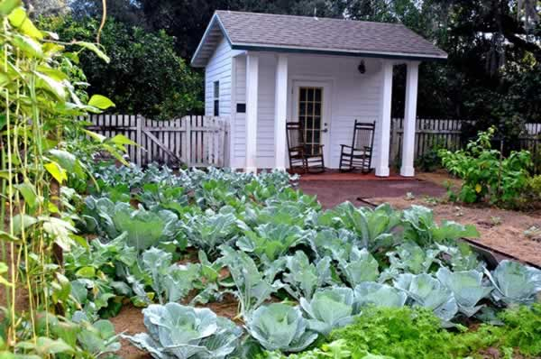 fall vegetable garden - Fall Vegetable Garden