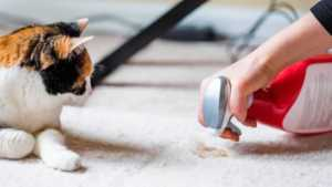How to clean pet stains on your carpet - cat