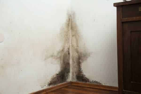 How to keep mold and mildew away from your home