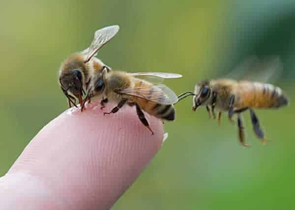 How to remove bees without getting stung