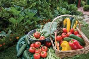 Rewards to owning a greenhouse - fresh vegetables