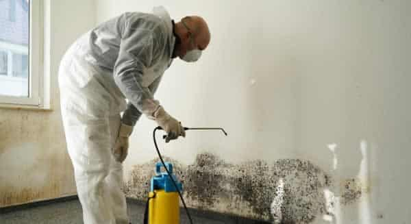 Is Black Mold Really a Toxic Cause for Panic - removing mold