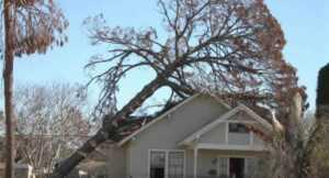 Tree removal tips - fallen tree