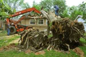 Advantages of hiring a tree removal service