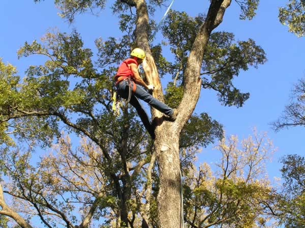 Advantages of hiring a tree removal service - tree care