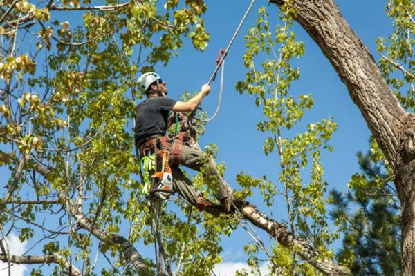 Tips for finding a good tree service - climbing