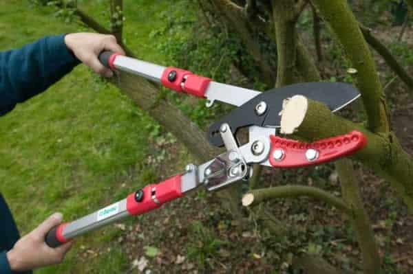 How to choose the right tool on tree cutting - ratchet loppers