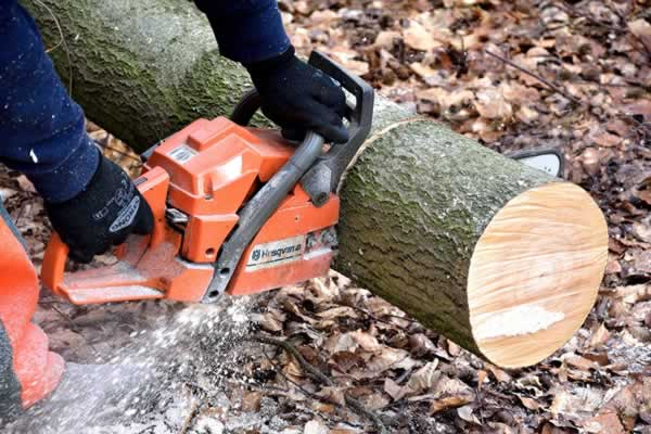 How to choose the right tool on tree cutting