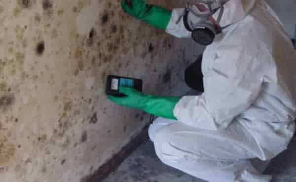Los Angeles mold removal companies - mold inspection