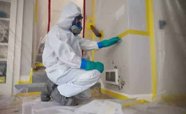 Los Angeles mold removal companies
