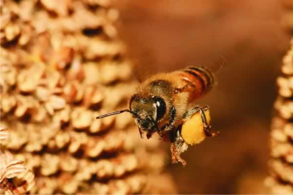 Effective ways to get rid of bees in your backyard