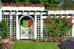 Landscaping ideas on how to design your garden - decorative vines