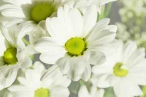 Printable designs - floral