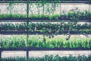 Printable designs - garden