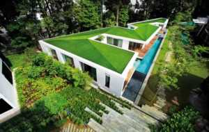 Best material for your new roof - green roof