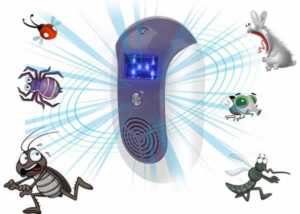 Practical ways to get rid of pest infestations fast - pest repellent