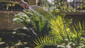 Awesome DIY projects to start this summer - gardening corner