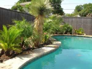 Landscaping tips for pools braving the Texas - plants around the pool