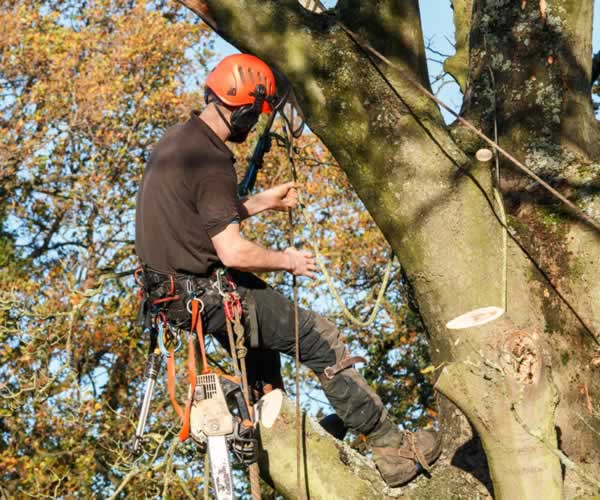 Tree Surgeons: Who Are They and What They Actually Do