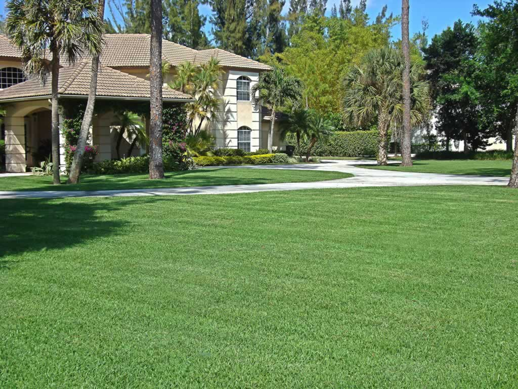 Easy Tips to Protect and Beautify Your Lawn