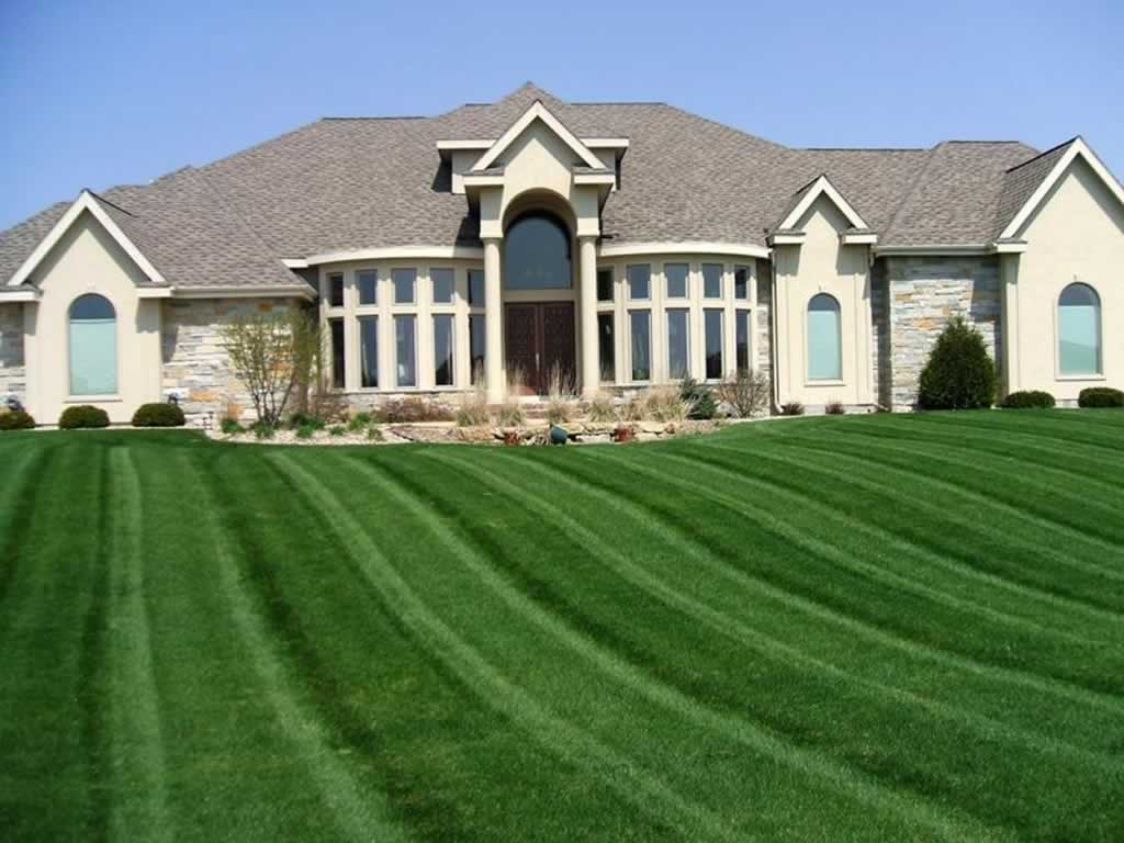 Easy tips to protect and beautify your lawn - beautiful lawn