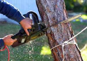 Home improvement projects you shouldn't DIY - cutting tree