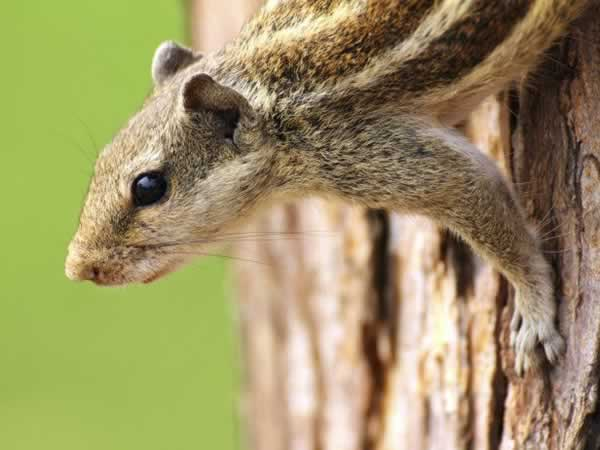 Keeping your gardens pest-free the organic way - chipmunk