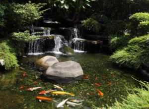 Own a Koi pond on your property - beautiful koi pond