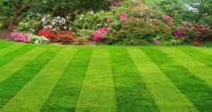 Pointers to properly maintain your lawn