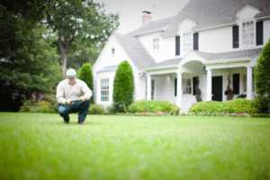 Hiring a lawn care professional in 4 easy steps - professional