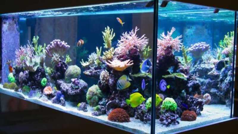 How to Maintain Your Fish Aquarium