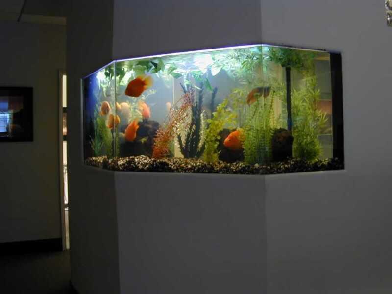 How to maintain your fish aquarium - in the wall fish aquarium