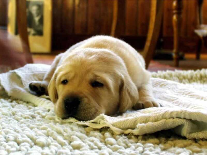 Tips for Making Your House Welcoming for the New Arriving Puppy