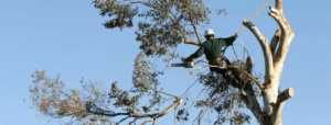 Tips to hiring a reputable tree service - men on the tree