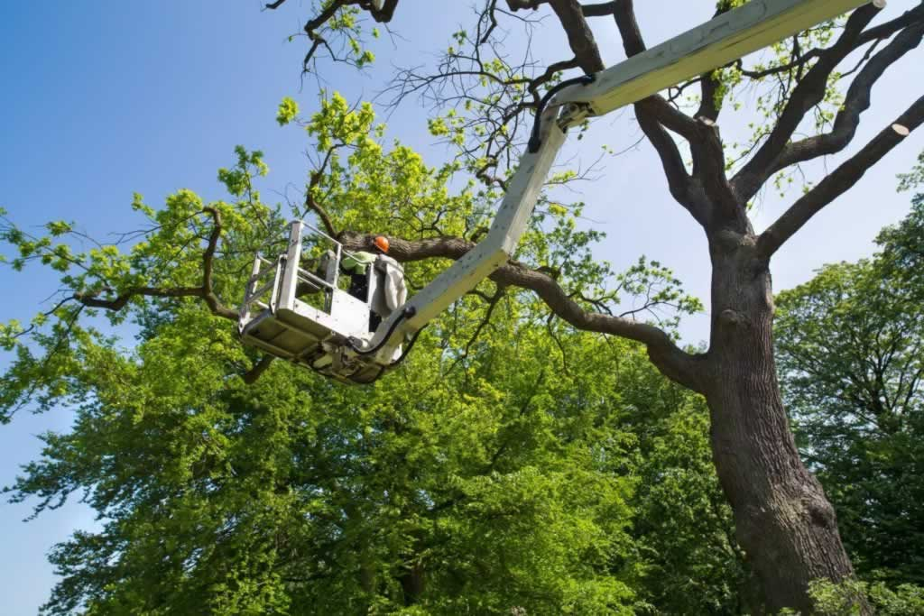 Tips to hiring a reputable tree service