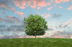 Finding A Great Handyman And Tree Surgeon