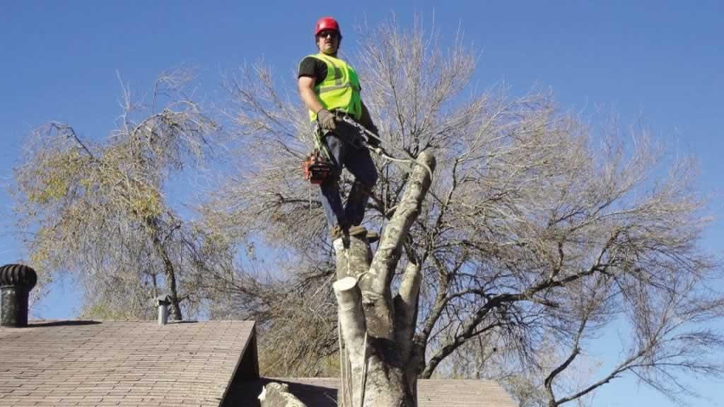 Finding a great handyman and tree surgeon - tree surgeon