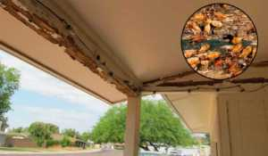 Tips for getting rid of termites - termite damage