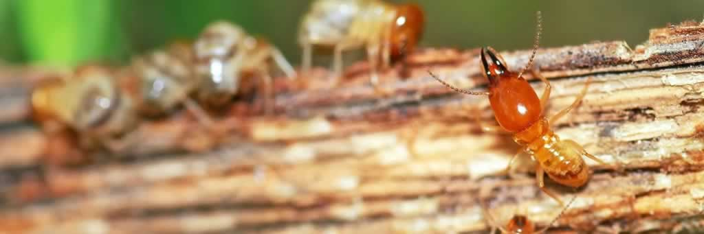 Tips for getting rid of termites