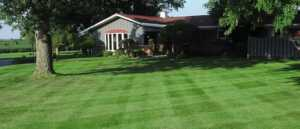 What is The Right Grass for My Lawn