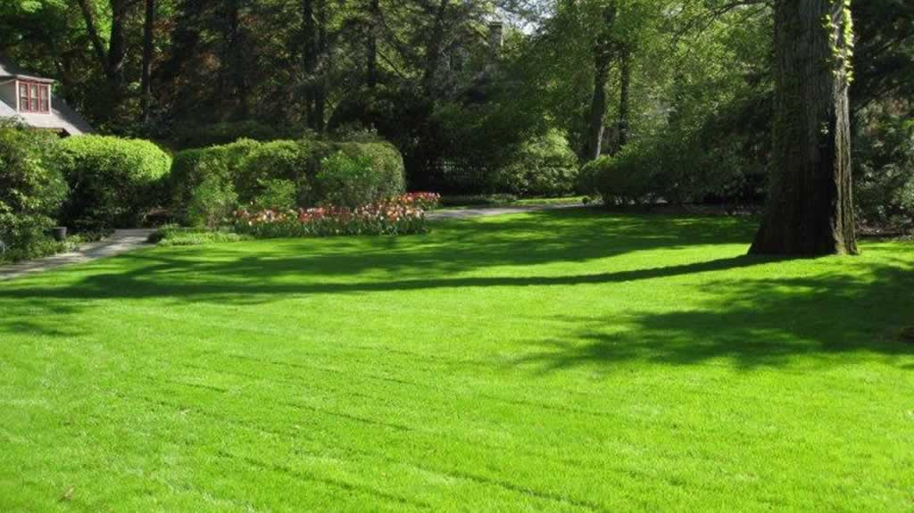 What is the right grass for my lawn - perfect lawn