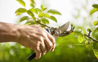 Seven Signs It's Time To Hire Professional Tree Trimmers - prunning