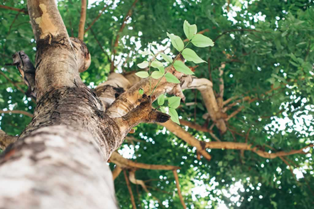 Seven Signs It's Time To Hire Professional Tree Trimmers