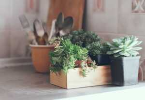The Best House Plants for Small Spaces