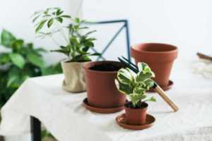 The Best House Plants for Small Spaces - small pot
